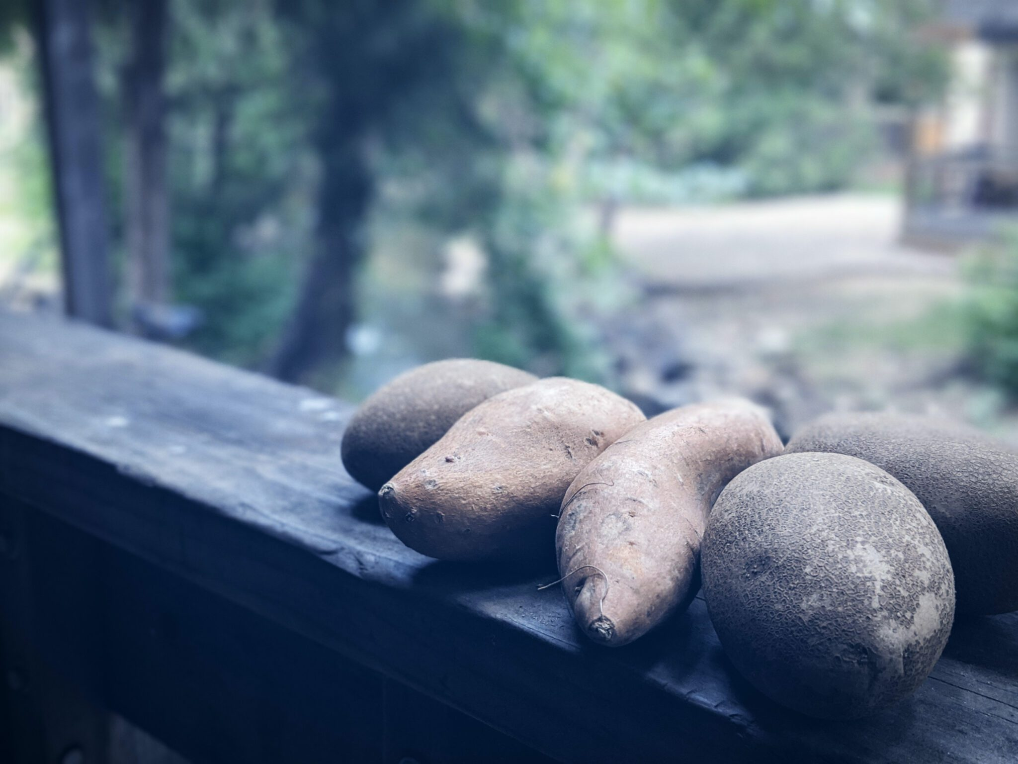 Potatoes for race nutrition